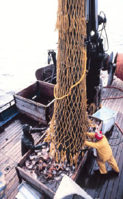 Trawl fishing
